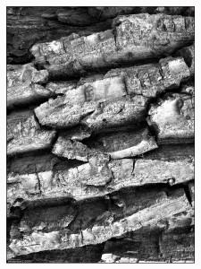 Viziunea abstracta a unui trunchi de copac