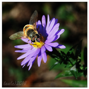 fotografierea insectelor
