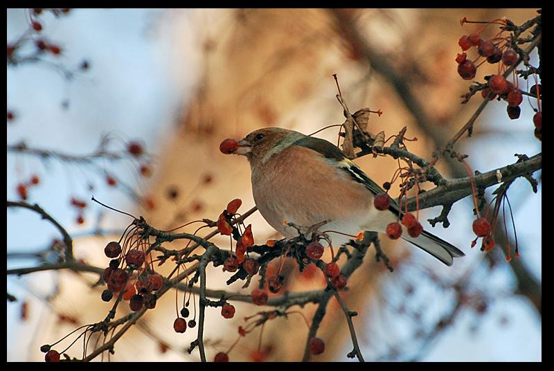 fotografiera pasarilor