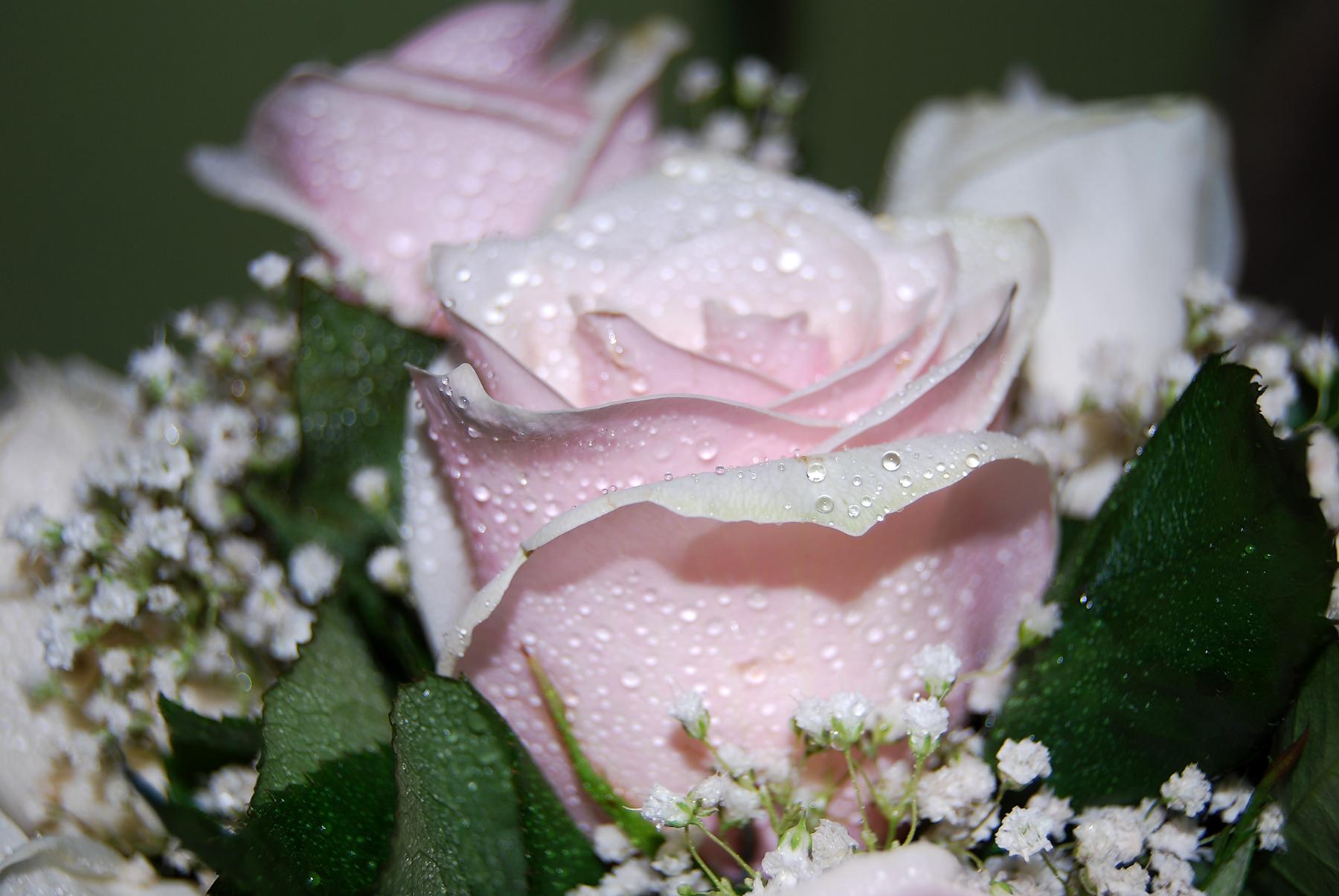 Flori ude