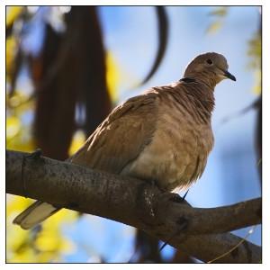 fotografierea pasarilor